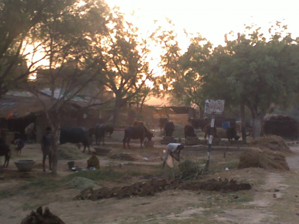 A farm in rural eastern Uttar Pradesh.
