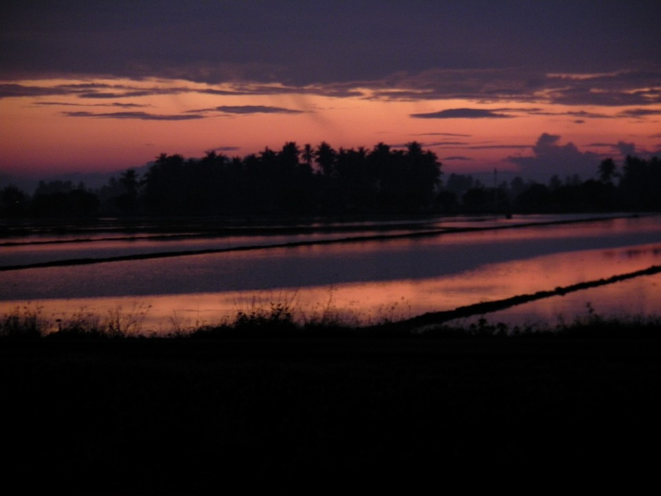 Dawn over the flooded rice fields in southern Thailand.